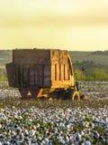 Cotton harvesting. Machanized cotton harvesting in Brazil stock photos