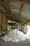 Cotton Material Group Pile Process Stock Photo