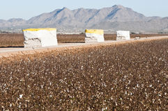 Cotton modules. Alongside of a cotton field that has been picked Royalty Free Stock Photo