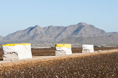 Cotton modules. Alongside of a cotton field that has been picked Royalty Free Stock Image