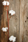Cotton organic plant buds closeup wooden background Royalty Free Stock Photos
