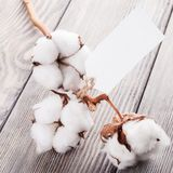 Cotton organic textile Royalty Free Stock Images