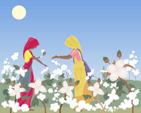 Cotton picking. An illustration of two traditionally dressed women laborers in india picking cotton in a field under a hot sun and blue sky Royalty Free Stock Image