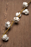 Cotton plant Stock Image