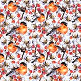 Cotton plant branches, red berries, winter finch birds. Repeating pattern. Watercolor Royalty Free Stock Images