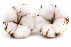 Cotton Plant Royalty Free Stock Images