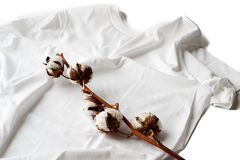 Cotton Plant on a Cotton Shirt. A stem of a raw cotton plant is lying on a cotton t-shirt illustrating it's origins. Horizontal shot Royalty Free Stock Image