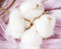 Cotton plant flower branch on purple cloth Royalty Free Stock Image