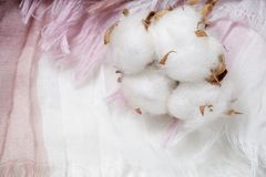 Cotton plant flower branch on purple cloth Stock Photography