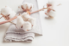 Cotton plant flower branch on white background Stock Photography