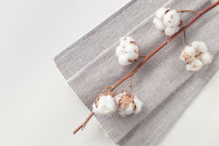 Cotton plant flower branch on white background. Cotton plant flower branch with grey fabric on white background Stock Photography