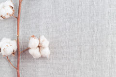 Cotton plant flower branch on white background. Cotton plant flower branch on grey fabric surface. Textile background with border stock photo
