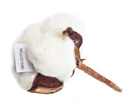Cotton plant flower. With tag label on white background Royalty Free Stock Images