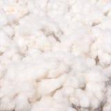 Cotton Royalty Free Stock Photos