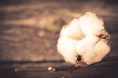 Cotton Royalty Free Stock Image
