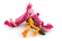 Cotton rope for dog toy Stock Images