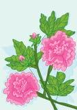 Cotton Rose Card_eps Stock Photo