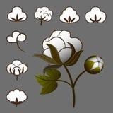Cotton set Stock Image