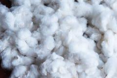 Cotton is a soft, fluffy staple fiber. Stock Photo