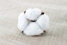 Cotton texture Stock Image