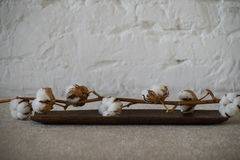 Cotton twig on wooden plate. Branch of cotton flowers brick wall background Stock Image
