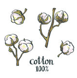 Cotton. Vector hand drawn set Stock Photography