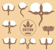 Cotton. Vector illustration (EPS 10 Stock Photography