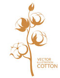Cotton. Vector illustration (EPS 10&#x29 royalty free illustration