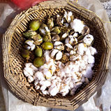 Cotton was picked  in Chinese courtyard . Cotton was picked in a basket Stock Images