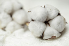 Cotton, macro Stock Photography