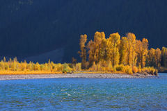 Cotton wood trees by snake river Royalty Free Stock Images