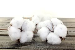 Cotton on wood Royalty Free Stock Image