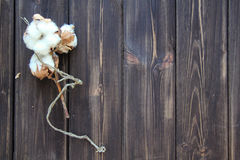 Cotton on wooden table. Large Flowers of cotton on wooden table Royalty Free Stock Photo