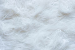Cotton Wool Texture. With White Stock Photo