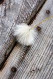 Cottongrass Fotos de Stock