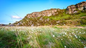 Cottongrass below Great Wanney Crag stock photography
