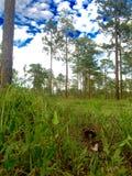 Cottonmouth-Schlange im Gras lizenzfreies stockbild