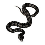 Cottonmouth Snake on White Stock Images