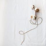 Cottonon on the white background. Cottonon plant on the white textile background Stock Images