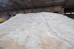 Cottonseed Stock Photo