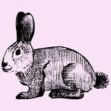 Cottontail, rabbit. Doodle style, sketch illustration Stock Photography