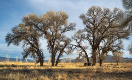 Cottonwood Cabin in Pahranagat National Wildlife Refuge royalty free stock image