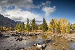 Cottonwood Creek. In the Grand Teton National Park royalty free stock photos