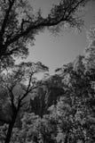Cottonwood de Zion Imagen de archivo