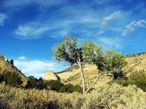 Cottonwood e canyon Fotografia Stock Libera da Diritti