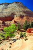 Cottonwood i Suchy obmycie przy szachownic mesami, Zion park narodowy, Utah Zdjęcie Stock