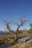 Cottonwood and Lake. A stately cottonwood stands along the shore of scenic watson lake near prescott arizona with interesting granite rock formations Stock Photography