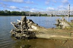 Cottonwood logs washed up on shore. Huge cottonwood logs have washed on shore with the retired two tiered bridge of Yankton SD as it spans the in the Missouri royalty free stock images