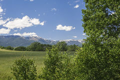Cottonwood tree and green mountain meadow Stock Photo