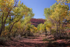 The Cottonwood Tree Lined Road. Autumn Cottonwood trees in the Capital Reef National Park in Utah USA offof aroad called The Burr Trail in Southern Utah Royalty Free Stock Photo